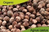 Organic Agnus Castus Berries 500gm