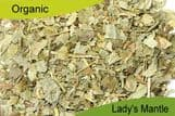 Organic Lady's Mantle 75gm